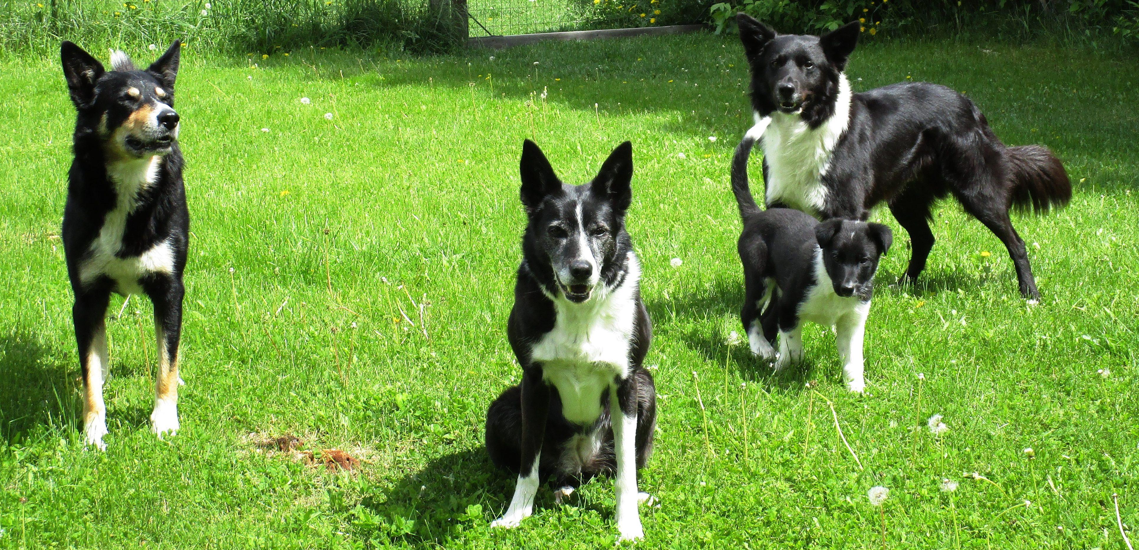 Pawsome Connection Dog Training